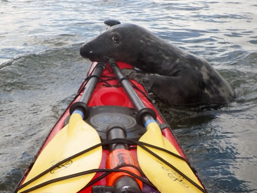 Sea Kayak with Scottish Wildlife